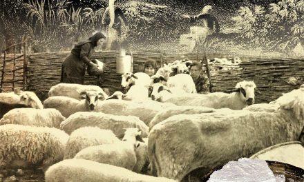 Ελληνικό τυρί  Υπό την «αιγίδα» της Αμάλθειας…