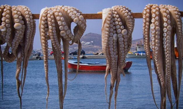 Χταπόδι: ένα από τα πιο υγιεινά θαλασσινά